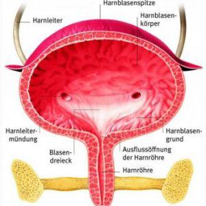 Гіперактивний сечовий міхур: причини, симптоматика, лікування