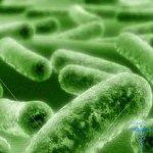 Лікування грибка шкіри: фото і симптоми захворювання