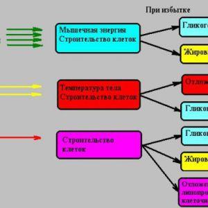 Правильне вживання рослинних і тваринних білків