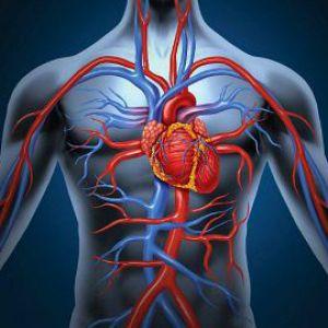 Скільки літрів крові в організмі людини